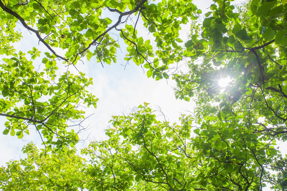 Forest bathing trees light